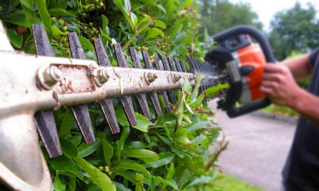 Hedge & Shrub Pruning & Shaping